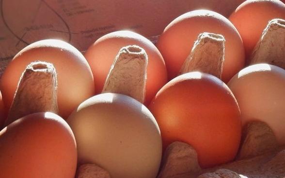 šťastná vejce pronájem slepičky Pro slepičí kvoč